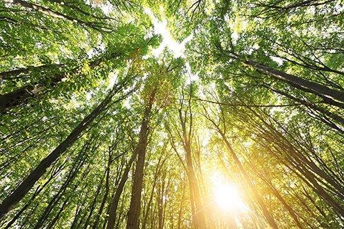 Finding a Spiritual Path