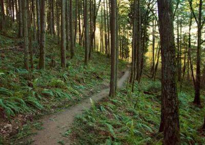 MtTalbert-Trail